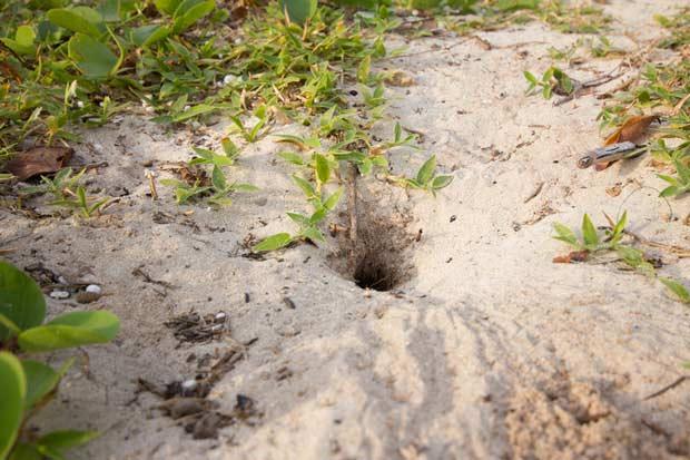 bigstock-Crab-Hole-On-The-Beach-45066412