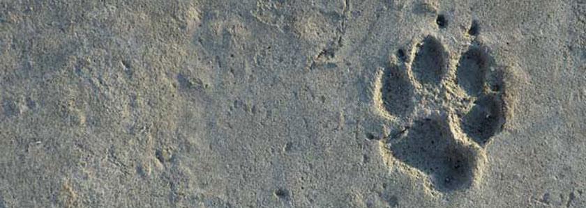 animal foot print